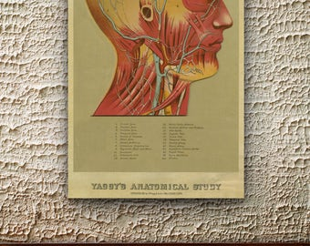 Vintage Print of Yaggy's Anatomical Study Head Chart on Matte Paper, Photo Paper or Stretched Canvas