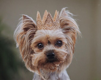 ultra MINI Harper gold lace crown for small dog or pet    photography prop