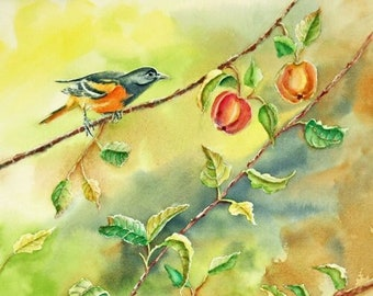 """Baltimore Oriole Birds in Apple Tree Original Watercolor Painting, 11 x 17"""" image matted to 16 x 20"""""""