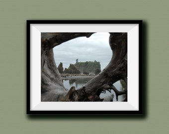 Through the Driftwood, Landscape Photography, Print