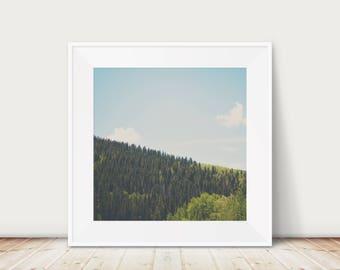 tree photograph, mountains photograph, New Mexico print, Santa Fe photograph, National Forest print, southwest decor