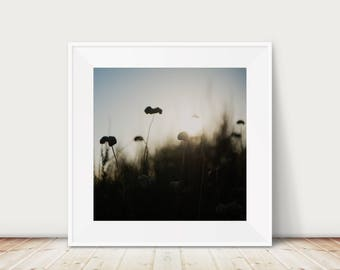 wild flowers photograph, flora print, nature photography, flower silhouette art, botanical print, California decor