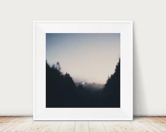 Giant Redwoods photograph, California photograph, woodland decor, travel photography, Giant Redwood print, Pacific Coast Highway print