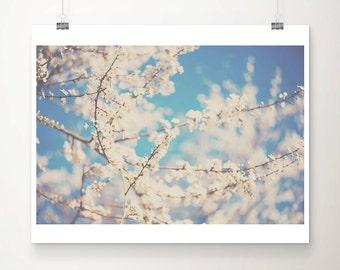 apple blossom photograph blossom tree photograph nature photography spring photograph flower photograph apple blossom print