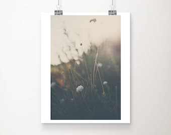 buckwheat photograph, nature photography, California print, mountains print, rustic decor, vertical wall art