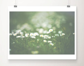white daisy photograph white flower photograph spring photograph nature photography green home decor floral print daisy print