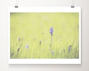 SALE bluebell photograph, flower photograph, nature photography, purple flower print, green grass art