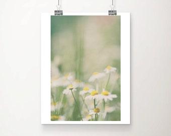 daisy photograph daisy print white flower photograph english garden photograph nature photography white flower print botanical print