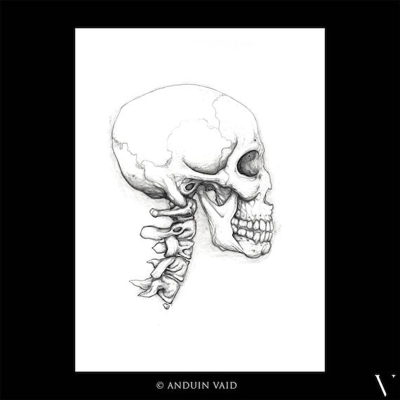 Ohne Titel Schädel und Hals Schädel Skelett Zeichnung | Etsy