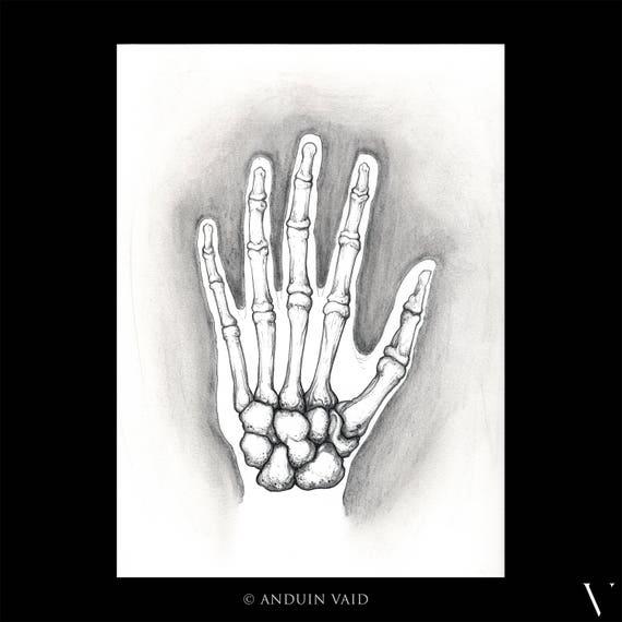 Untitled Hand Bones Pencil Sketch Of Hand Anatomy Nyc Etsy