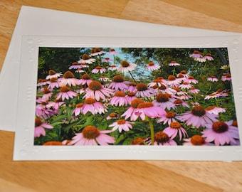 Photo Greeting Card - Coneflowers