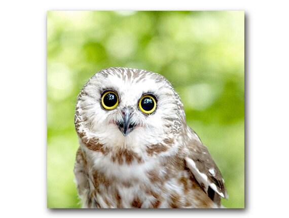 Image of: Saw Whet Image Etsy Cute Owl Photo Woodland Animal Sawwhet Owl Nature Etsy