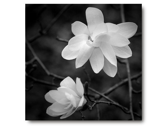 Black And White Flower Photography Black And White Art Print Etsy