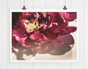 Large Pink Peony Print, peony art, modern flower photography, nature print, pink flower print, pink nursery decor, wall art, fine art print