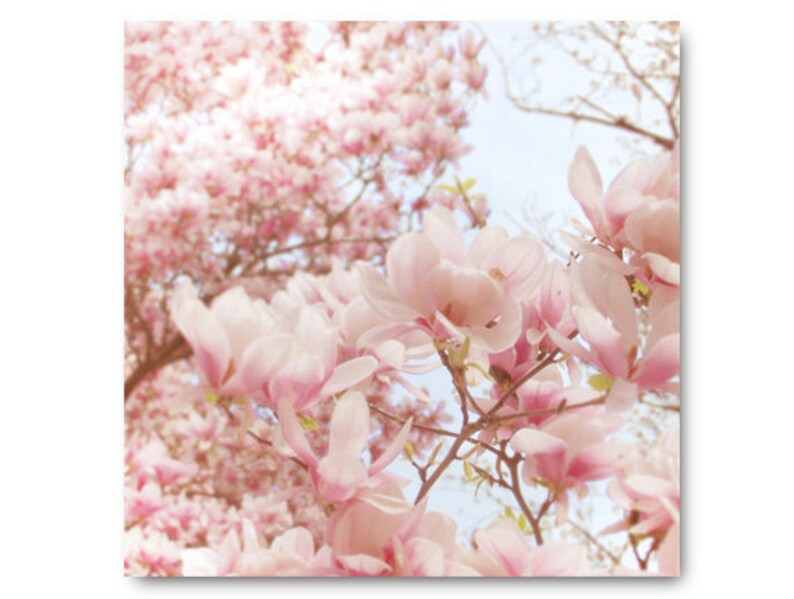 Pale Pink Magnolia Photo Pastel Flower Photo Fine Art Print Etsy