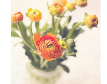 orange flower print wall decor, ranunculus photograph, flower art print, floral art, flower photography, still life, fine art photography,