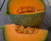 Hale's Best Cantaloupe Excellent Sweet Flavor Juicy Texture Easy to Grow Rare Seeds Grown To Organic Standards