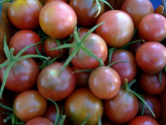 Graines de tomate cerise noire héritage cultivés aux normes biologiques plus doux variété extrêmement prolifique meilleur vendeur rares graines
