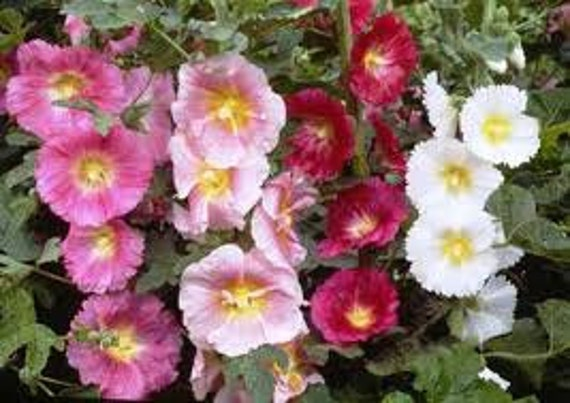 image 0 - English Garden Flowers