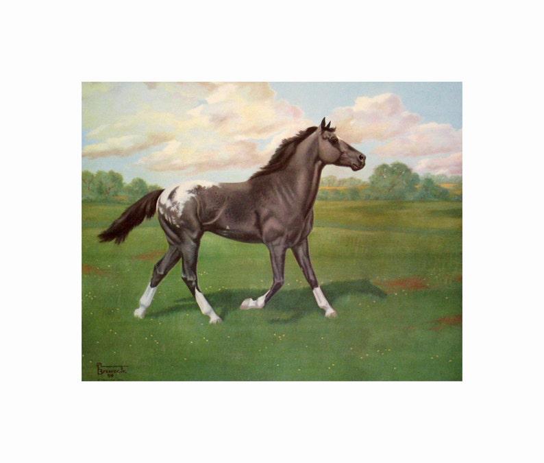WARRIOR LEOPARD Beautiful Appaloosa by Allen F  Brewer Jr  - Print size 17