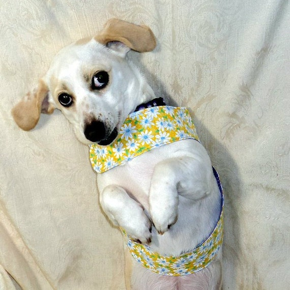 Kleine Hundegeschirr Reversible Schmetterling Stil OOAK   Etsy