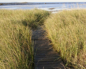 """Path to the beach in Biddeford Pool Maine -  8 x 10"""" color print"""