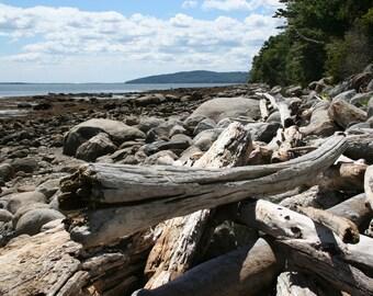"SALE! Driftwood on the beach -  5 x 7"" color print"