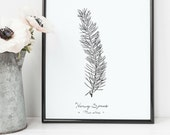 Norway Spruce Tree Leaf P...
