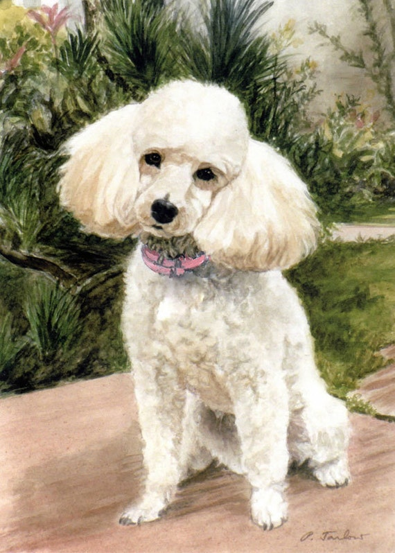dog Poodle ACEO PRINT -Walk in the Park pets woman