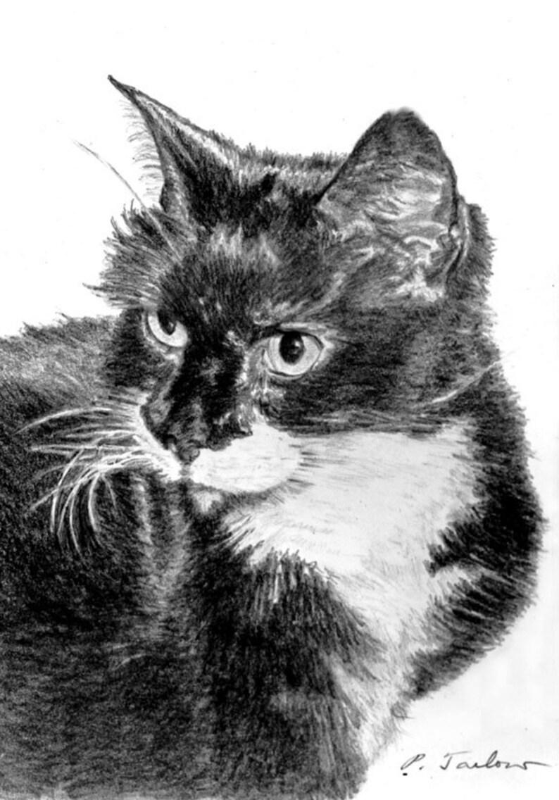 Black and white cat pencil art tuxedo cat drawing print cat portrait art print cat art black and white cat drawing by p tarlow