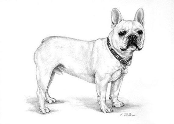 Bow Tie French Bulldog Drawing Art Print Framed Poster Wall Decor