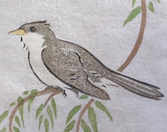 Yellow Billed Cuckoo 1