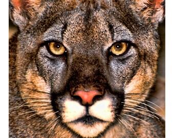 20c2b4a81dab Wildlife Series Two  Mountain Lion