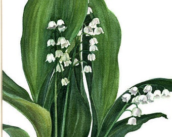 """Original Watercolor - """"Lilies of the Valley"""" by Kim Eng Yeo"""