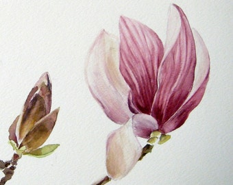 Fine Art print of an original watercolor - Magnolia buds