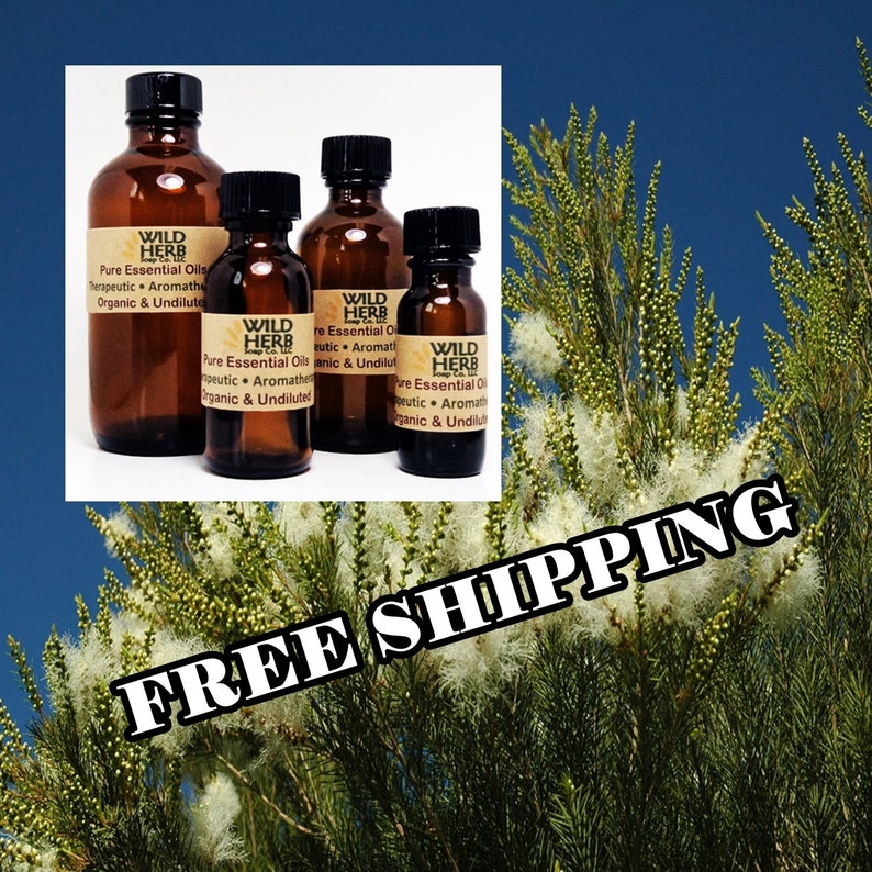 ORGANIC TEA TREE Essential Oil Melaleuca Pure Therapeutic