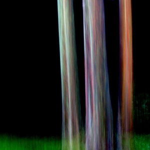 Mysterious black forest three trees rainbow eucalyptus tree fine art 12x18