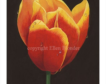 Red Tulip, Large Giclee Print