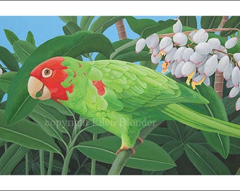 Parrot Giclee Print