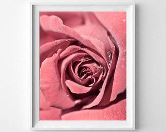Pink Rose with Dew Vertical Fine Art Print - Floral Wall Art, Flower Photography, Feminine Decor, Nature Decor Print