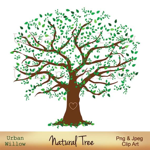 family tree 12 inch natural tree clip art large leafy tree etsy
