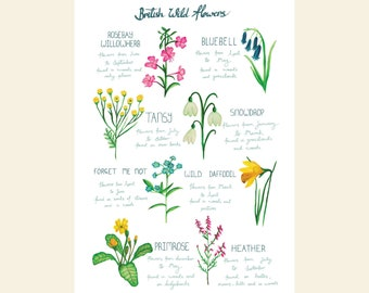 British wildflowers A4 print