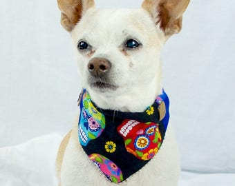 Dia de los Muertos, Day of the Dead Dog & Paw Print Bandana, Blue Ribbon Dog Bandana, Reversible Dog Bandana, Slip-on Collar Dog Bandana