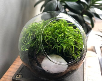 Tiny Terrarium Kit • Micro Terrarium • Tiny Terrarium With Live Moss • Miniature Terrarium Kit • Tiny Moss Terrarium Kit