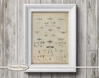 Dragonfly Mini Poster vintage crafting paper craft art prints wall art instant download printable paper digital collage sheet - VDWAVI1596