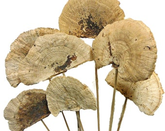 7 Dried Sponge Mushrooms on a Stick, Dried Natural Mushrooms, Preserved Mushrooms on a bendable stick for Wreaths
