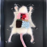 White Knitted Lab Rat in an actual dissection tray