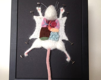 White Knitted Lab Rat: Framed with Black Background