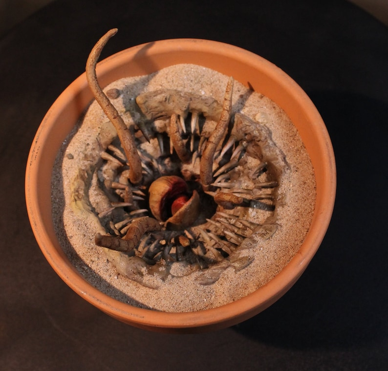 Mini Baby Sarlacc Pit Star Wars Monster Planter image 0