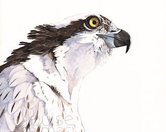 Osprey Watercolor painting Print of watercolor A3 size wall art print - bird art print O2014, osprey print of watercolor painting